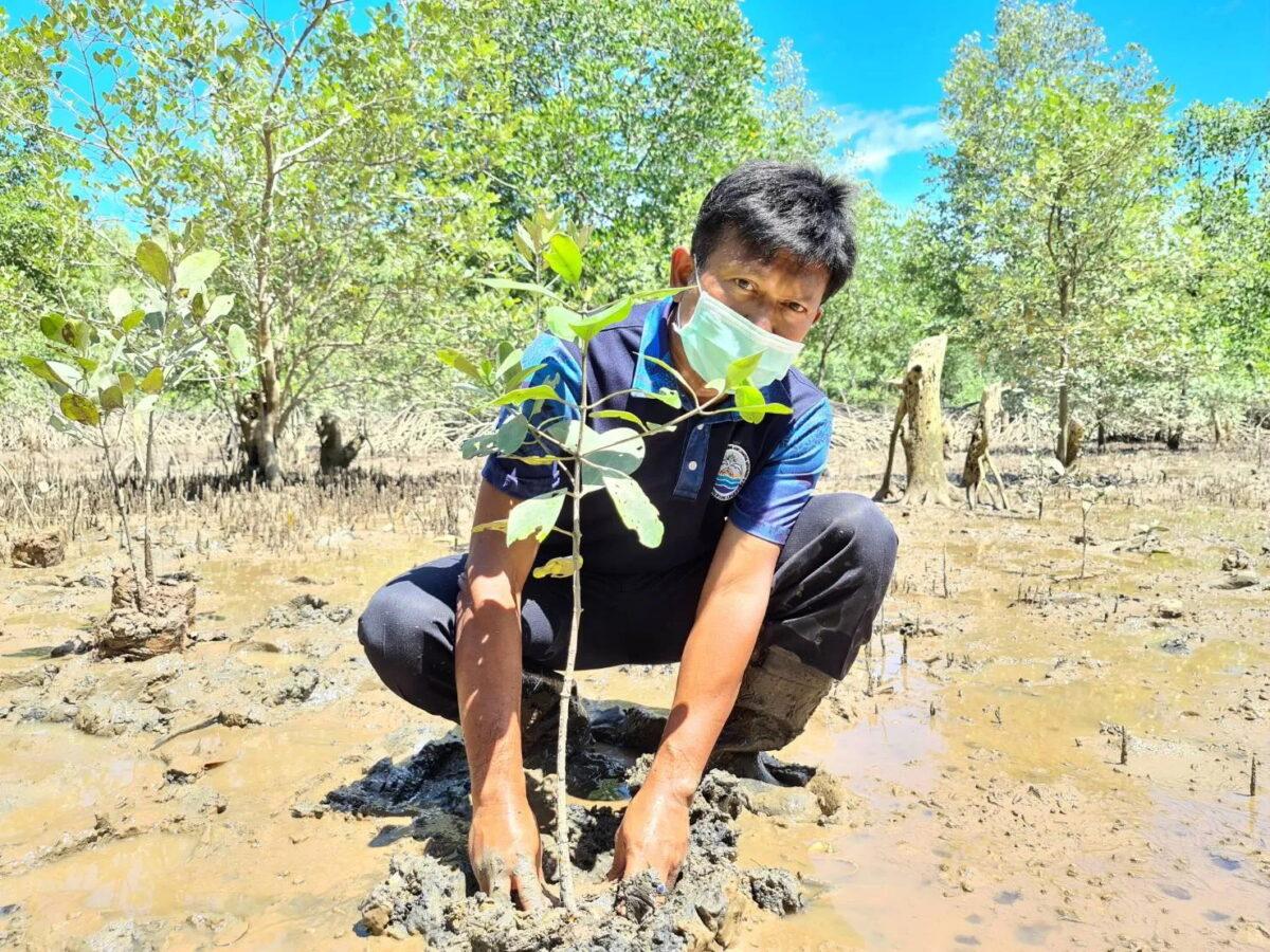 mangrove ecology